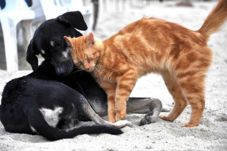 Nuestras mascotas un refugio natural en casa