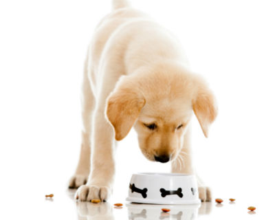 Alimentacion de perros