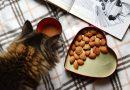 Cuida de tu mascota con una buena alimentacion