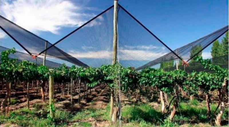 Mallas de sombreo para proteger cultivos