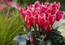 Plantas para tu jardín y el interior de tu casa