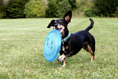 A jugar Frisbee