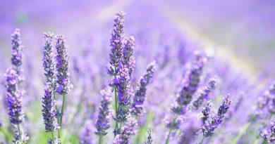 Flores para cuidar la piel
