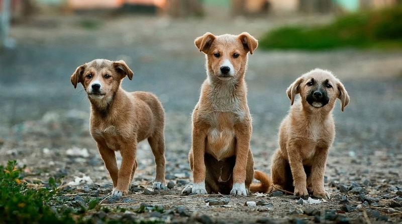 Nombre original para un perro