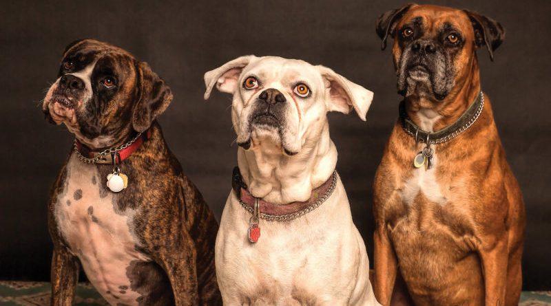 Lo que debes saber antes de tener un perro