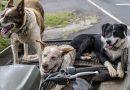 Servicio de transporte privado para mascotas