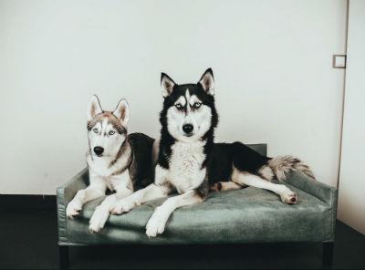 Cómo elegir el sofá ideal para perros