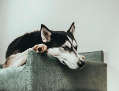 Sofá para mascotas