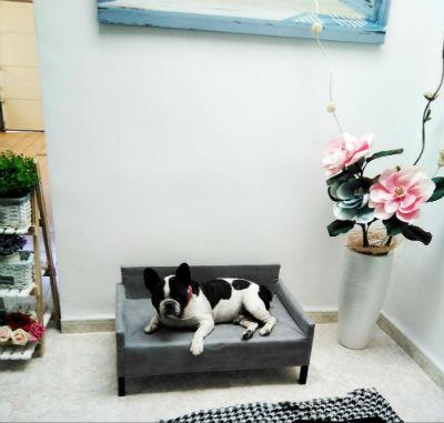 Ventajas de adquirir un sofá para mascotas