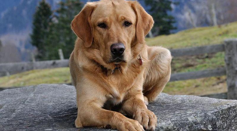 Aspectos a considerar en un perro