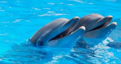 aventura mágica con delfines en Los Cabos