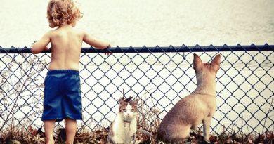 Protege a tu mascota de parásitos