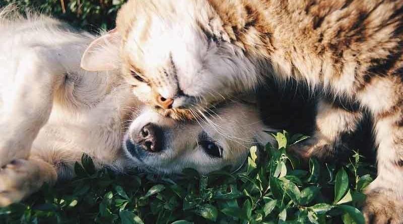Parasitos en las mascotas